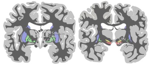 Jak nauczyć mózg rozwijania zdrowych nawyków